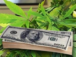 marijuana-money-profits-earnings-medical-marijuana-project