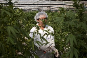 APTOPIX Mideast Israel Medical Marijuana