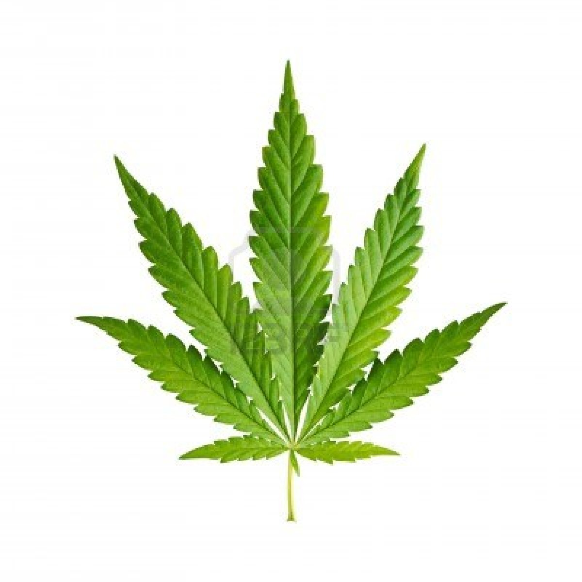 the classification of cannabis under the We contend that the classification of cannabis under the single convention is an anomaly and that the medical value of a substance must be determined by science.
