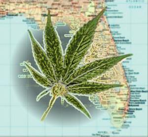 Florida-Marijuana-hbtv-hemp-beach-tv-3456